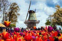 Mulino a vento decorativo nel parco di Keukenhof Turisti che camminano nel campo variopinto del tulipano del fiore Immagine Stock Libera da Diritti