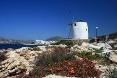 Mulino a vento e fiori - Paros Fotografia Stock