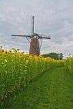Mulino a vento e girasoli Fotografie Stock