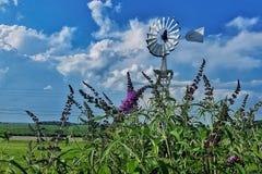 Mulino a vento fra i fiori di estate Fotografie Stock Libere da Diritti
