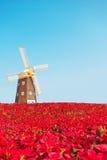 Mulino a vento nel giacimento di fiori Fotografie Stock Libere da Diritti