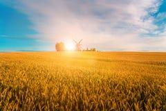 Mulino a vento nel giacimento di grano nella sera Fotografie Stock