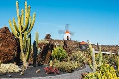 Mulino a vento nel giardino tropicale del cactus nel villaggio di Guatiza Fotografie Stock