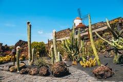 Mulino a vento nel giardino tropicale del cactus nel villaggio di Guatiza, attrazione popolare a Lanzarote Immagine Stock Libera da Diritti