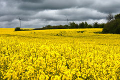Mulino a vento in seme di ravizzone fotografia stock