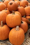 Multiple pumpkins placed on hay royalty free stock photography