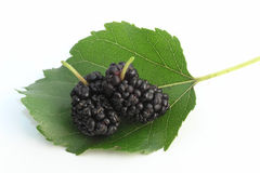 mullbärsträd Fotografering för Bildbyråer