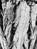 Mullbärsträd för _för trädstam arkivbild