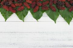 Mullbärsträd och sidor Royaltyfria Bilder