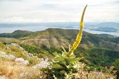 Mullein en montañas de la isla Imagen de archivo