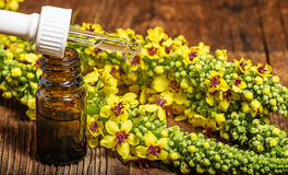 Mullein - verbascum extract. A some mullein - verbascum extract royalty free stock images