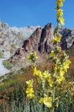 Mulleinbergen op de achtergrond Stock Afbeeldingen