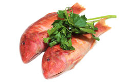 Mullet. A view of a red Mullet royalty free stock photos