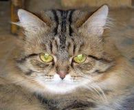 Mullido el gato fotos de archivo libres de regalías
