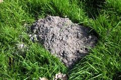 Mullvadshög Royaltyfri Fotografi