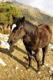 Mulo in campagna Fotografie Stock