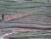 Mult colored tree bark. Green and browns in this tree bark compliment each other well stock photos