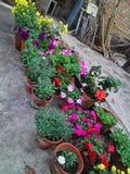 Multi цветок зимы Стоковая Фотография RF