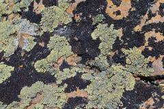 Multi цвет и типы Crustose организм лишайника который возникает от водорослей или цианобактерии и от грибков на валуне в Oquirr стоковые фотографии rf
