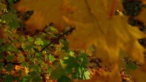Multi Autumn Trees colorato video d archivio