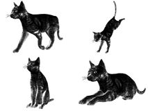 Multi Cat Sketch Render Royalty Free Stock Photography