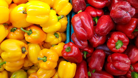 Multi color bell peppers  in the market. Royalty Free Stock Photo