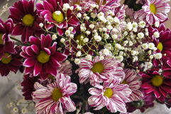 Multi color bouquet with such flower as dahlia and chrysanthemum. Bright Royalty Free Stock Images