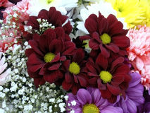 Multi color bouquet with such flower as dahlia and chrysanthemum. Bright Royalty Free Stock Photos