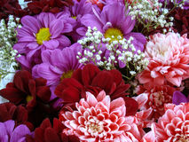 Multi color bouquet with such flower as dahlia and chrysanthemum. Bright Stock Images