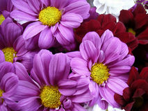 Multi color bouquet with such flower as dahlia and chrysanthemum. Bright colors Stock Image
