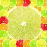 Multi color different citrus slices as background Stock Photo