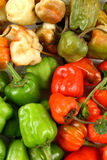 Multi color hot chilies Stock Images