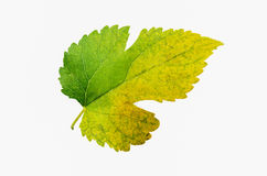 Multi color leaf isolated stock images