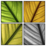 Multi color leafs Royalty Free Stock Photos