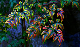 Multi color leaves pattern Royalty Free Stock Images