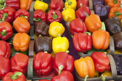 Multi color Pepper. Colorful pepper in the basket Stock Image
