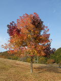 Multi-color Tree Royalty Free Stock Photography