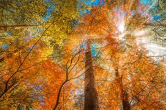 Free Multi Color Trees In The Autumn Forest Royalty Free Stock Images - 123841509