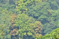 Multi color trees. At Nuwea aliya in Sri Lanka Royalty Free Stock Photography
