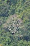 Multi color trees. At Nuwea aliya in Sri Lanka Stock Image