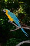 Multi-Colored Ara op tak Royalty-vrije Stock Fotografie