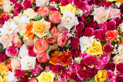 Multi colored artificial roses Royalty Free Stock Images