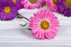 Multi-colored asters are scattered on the wooden Stock Image