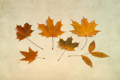 Multi-colored autumn leaves on aged paper Royalty Free Stock Photography