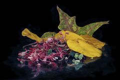 Multi-colored autumn leaves on a black background with reflection Royalty Free Stock Image