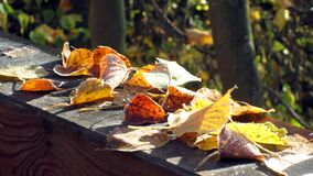Multi colored autumn leaves with hoarfrost Stock Photo