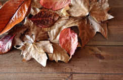 Multi-colored autumn Royalty Free Stock Photography