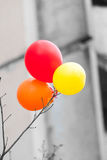The multi-colored balls hanging on a bough Royalty Free Stock Images