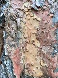 Multi colored bark texture royalty free stock photography