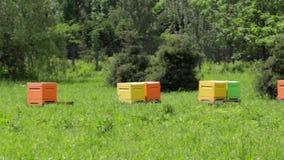 Multi-colored bijenkorven in de bijenstal met bijen stock videobeelden